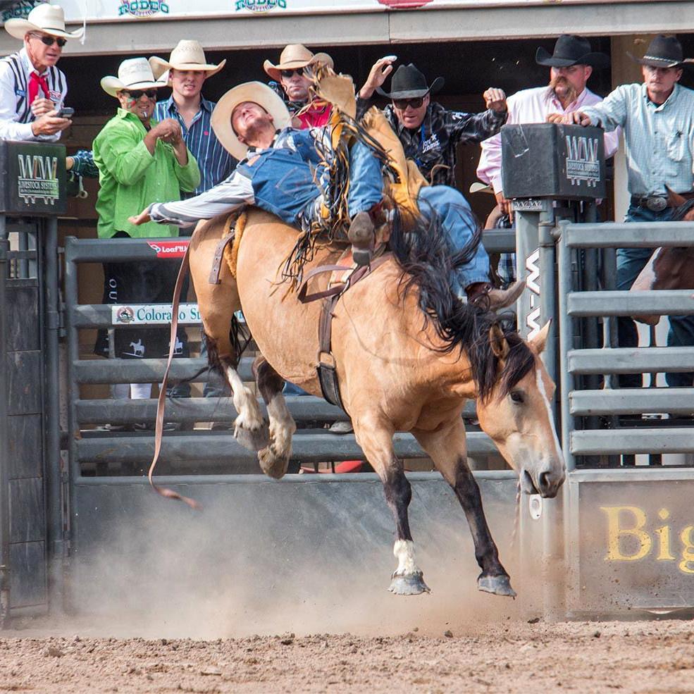 Colorado State Fair virtual