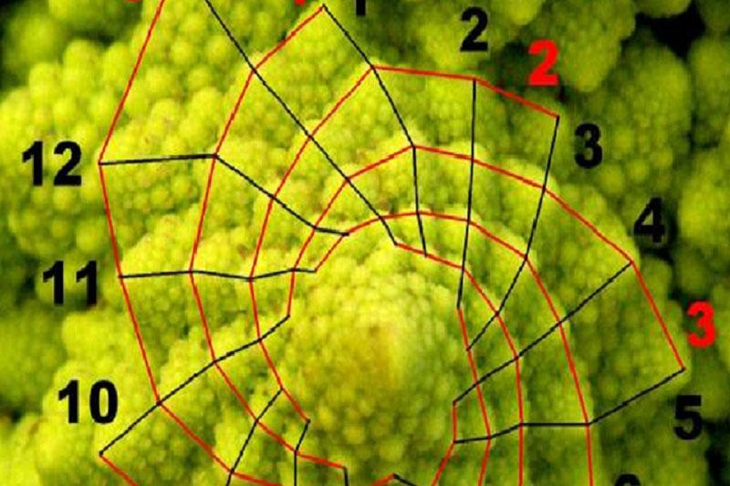 La exhibición Los números en la naturaleza